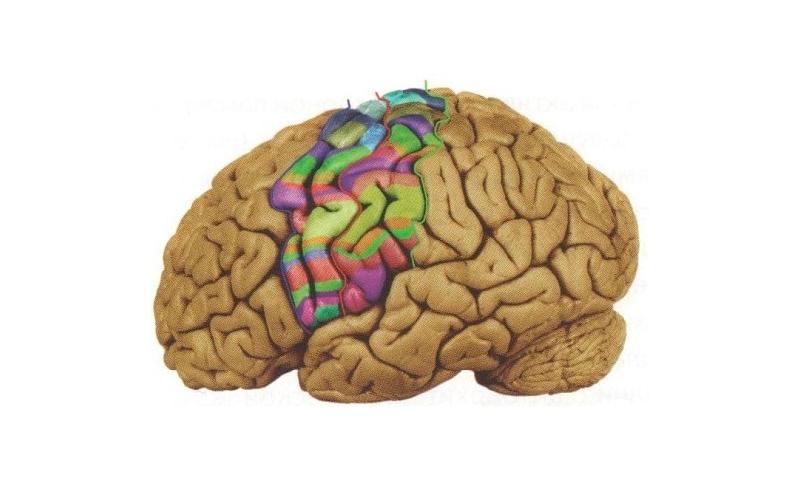 Biological aspect