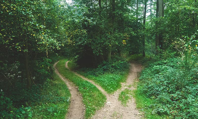 2 paths in woods