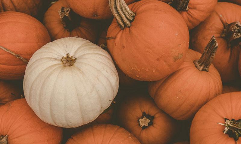White pumpkin between orange pumpkins